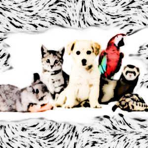 Les animaux de compagnie s'avèrent de véritables antistress et sont source de bien-être.