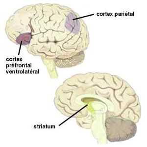 Le cerveau détecte nos erreurs de prédiction. Ce circuit est plus sensible au cours de l'adolescence.