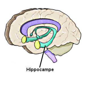 L'ictus amnésique aurait pour origine un dysfonctionnement temporaire au niveau des zones du cerveau impliquées dans la mémoire antérograde, notamment au niveau de l'hippocampe.