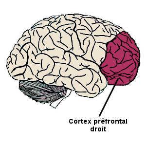 Le cortex préfrontal droit contrôle les autres aires cérébrales impliquées dans le contrôle de soi.