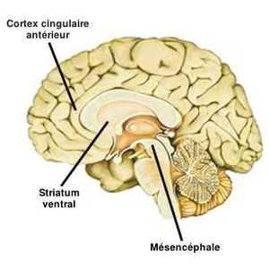 En jouant à un jeu de hasard, le circuit de récompense du cerveau, impliquant le striatum ventral, l'insula, le mésencéphale et le cortex cingulaire antérieur, s'active. Ces activité cérébrale procure alors une sensation de plaisir.