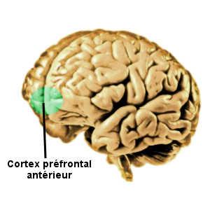 Le cortex préfrontal antérieur jou eun rôle essentiel dans la métacognition, c'est-à-dire la connaissance de ses forces et de ses faiblesses.