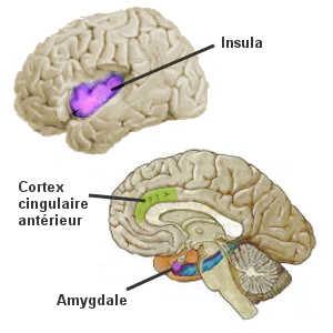 L'immersion en pleine nature stimule le cortex cingulaire antérieur et l'insula. En revanche, une immersion en zone urbaine active l'amygdale cérébrale.