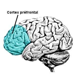L'effet placebo agit aussi bien sur la douleur physique que psychologique, et ce en raison de l'activité neuronale au niveau du cortex préfrontal.