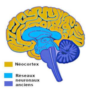 L'activité du cerveau en transe s'intensifie dans les réseaux neuronaux profonds et se réduit dans la matière grise du cortex.