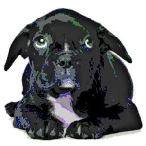Les trois quarts des chiens ont un tempérament anxieux qui tend à se manifester de diverses manières.