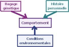 Skinner conçoit le comportement comme la résultante de l'environnement, de l'histoire personnelle et de l'expression des gènes.