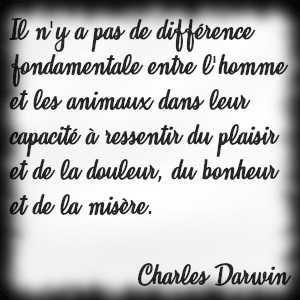 """""""Il n'y a pas de différence fondamentale entre l'homme et les animaux dans leur capacité à ressentir du plaisir et de la douleur, du bonheur et de la misère."""" Charles Darwin"""