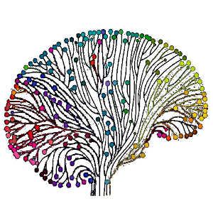 La pleine conscience semble déterminée par l'activité fluctuante de deux réseaux neuronaux : le réseau d'attention dorsale et le réseau du mode par défaut.