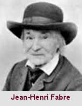 Jean-Henri Fabre, entomologiste (1823-1915).