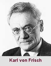 Karl von Frisch, éthologiste (1886-1982).
