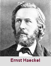 Ernst Haeckel, naturaliste (1834-1919).