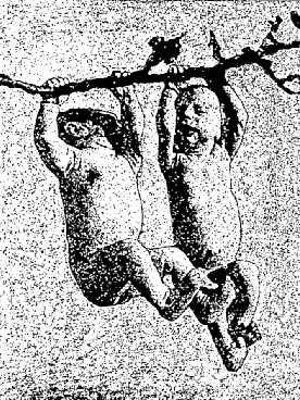 Nouveau-né suspendu par les mains. Expérience du Dr Robinson.