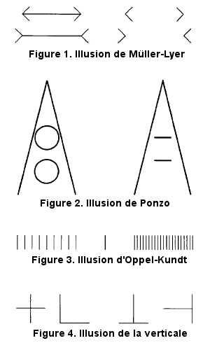 Les illusions de longueur des segments.