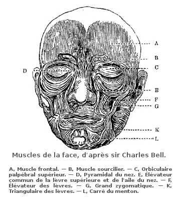 Muscles de la face, d'après sir Charles Bell.