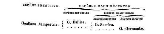 Types de Gentiana campestris identifiés par Murbeck.