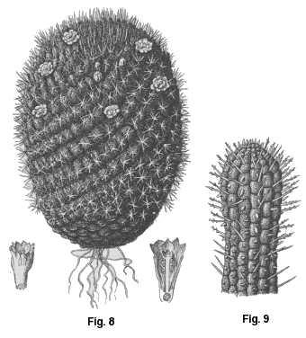 Euphorbes et Cactées sont des plantes vivant dans des milieux secs.