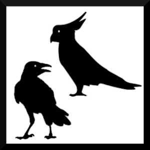 Malgré sa petite taille, le cerveau des oiseaux est très performant, parfois même autant que celui des grands singes.