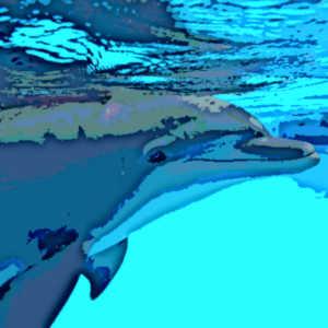 Contrairement au sommeil bihémisphérique, le sommeil unihémisphérique n'engage qu'un hémisphère cérébral à la fois, ce qui permet à certains animaux d'échapper aux prédateurs, de continuer à respirer sous l'eau ou à voler au-dessus des océans.
