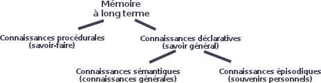 La mémoire à long terme (MLT) est constituée de connaissances sémantiques, de connaissances épisodiques, de connaissances déclaratives et de connaissances procédurales.
