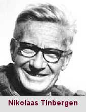 Nikolaas Tinbergen, éthologiste (1907-1988).